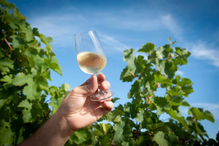 domaine du tastet vins