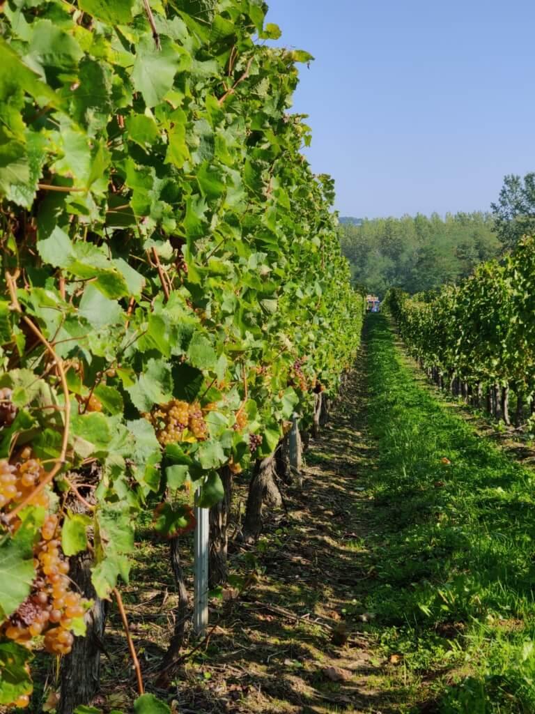 domaine tastet pouillon 40 vignes