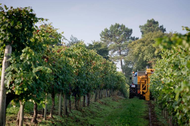 domaine du tastet vins landes 1
