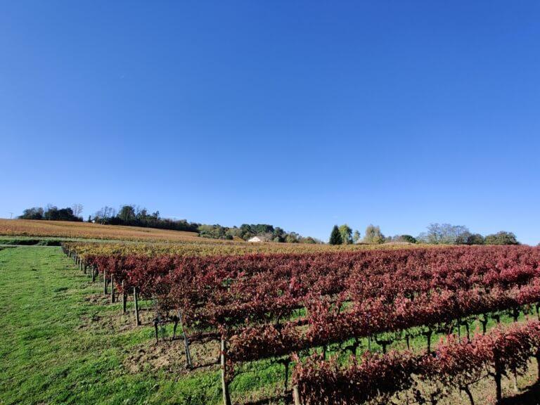 domaine du tastet vins landes 10