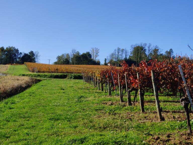 domaine du tastet vins landes 11