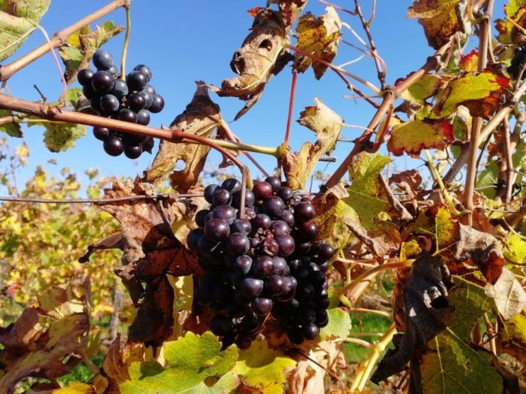 domaine du tastet vins landes 12