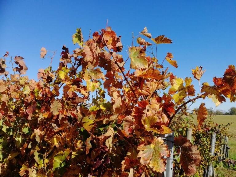domaine du tastet vins landes 13