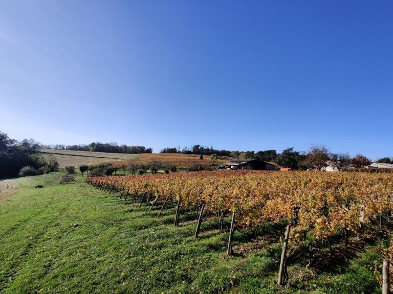 domaine du tastet vins landes 14