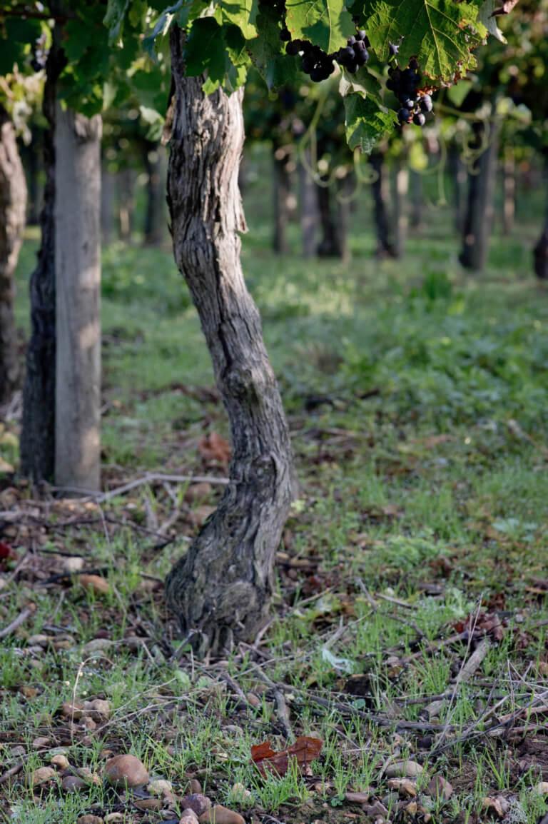 domaine du tastet vins landes 3