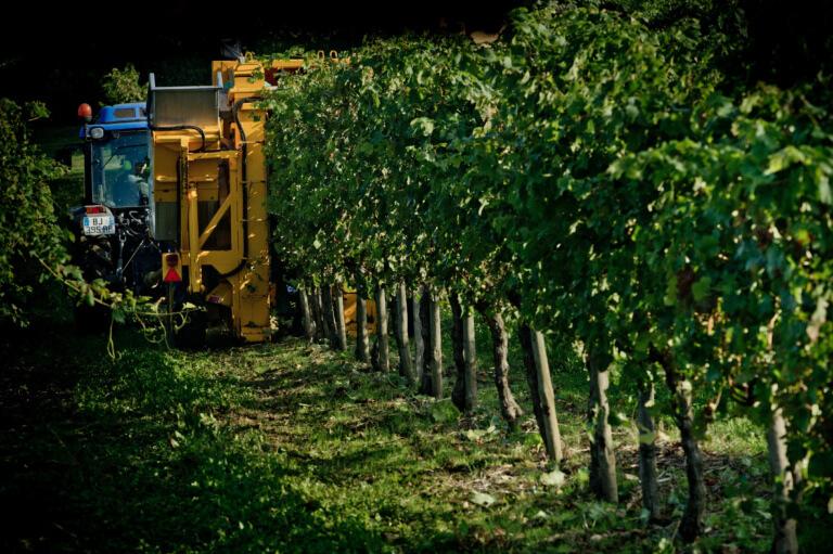 domaine du tastet vins landes 4