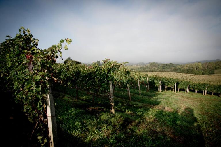 domaine du tastet vins landes 5