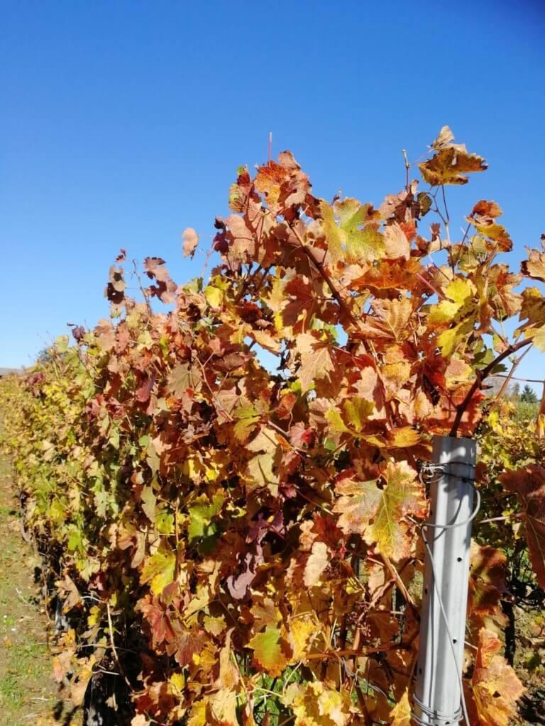 domaine du tastet vins landes 8