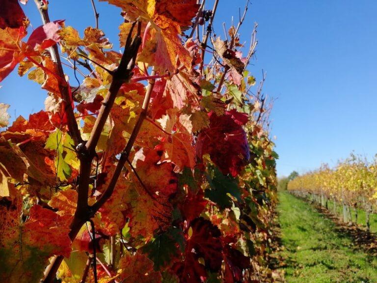 domaine tastet pouillon vins landes